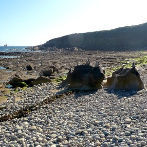 Walk down from the chapel perched high over Le Loch to a pebble beach and with the tide out, a rock-pooler's dream.